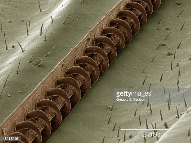 Coloured SEM of wasp wing