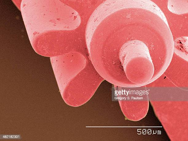 Coloured SEM of watch part