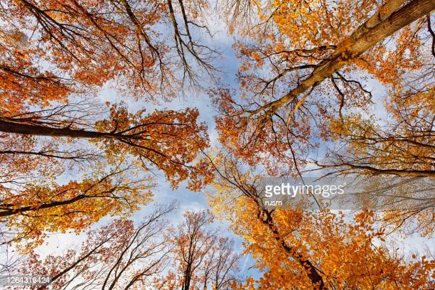 colourful autumn forest background - beautiful bare bottoms stock pictures, royalty-free photos & images