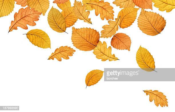 colourful autumn leaves xxl - turning stock pictures, royalty-free photos & images