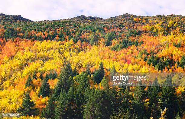 colourful autumn (fall) trees of the hills around arrowtown, queenstown - arrowtown stock pictures, royalty-free photos & images