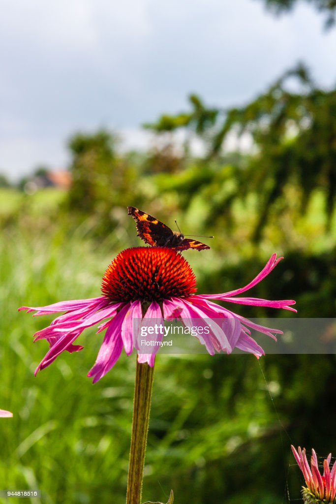 Colourful blooming flowers with insects in top : Stock Photo