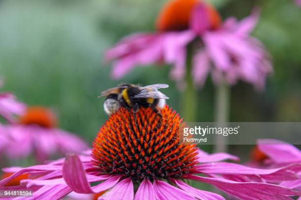 colourful blooming flowers with insects in top - calabrone foto e immagini stock