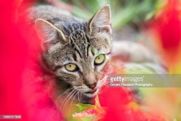 Colourful Cat Portrait