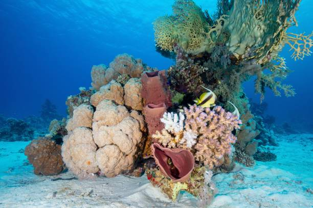 Colourful Corals Against The Blue Of The Red Sea