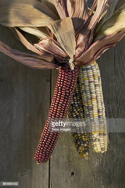 colourful corn hanging - indian corn stock photos and pictures