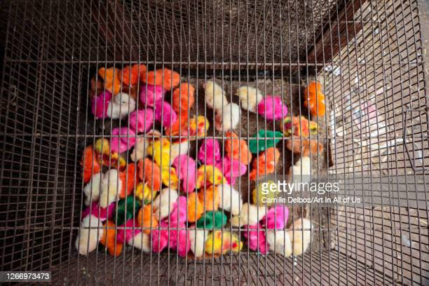 Colourful dyed chicks for sale at bird market on Avril 19, 2016 in Karachi, Sindh, Pakistan.