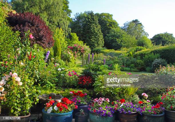 colourful english domestic garden full of flowers in july. - 花壇 ストックフォトと画像