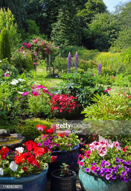 colourful english domestic garden in summer. - delphinium stock pictures, royalty-free photos & images