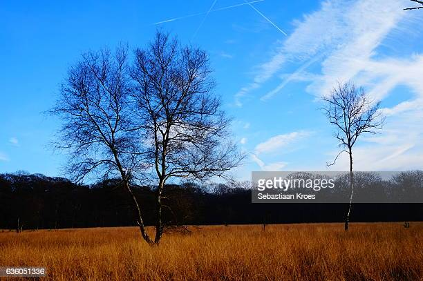 Colourful field with trees, Hoge Veluwe, the Netherlands
