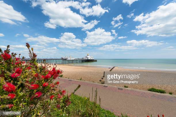 colourful floral displays on the promenade and pier, eastbourne - eastbourne stock photos and pictures