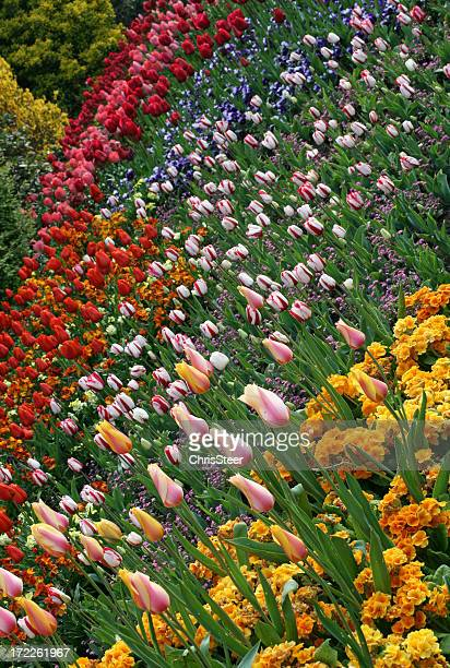 colourful flower bed - chelsea flower show stock pictures, royalty-free photos & images