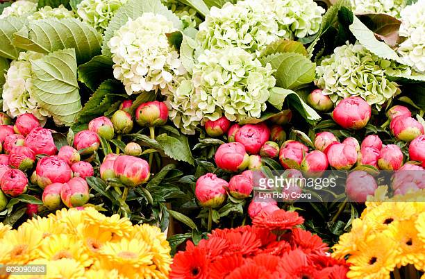 colourful flowers on flower stand - lyn holly coorg stock pictures, royalty-free photos & images