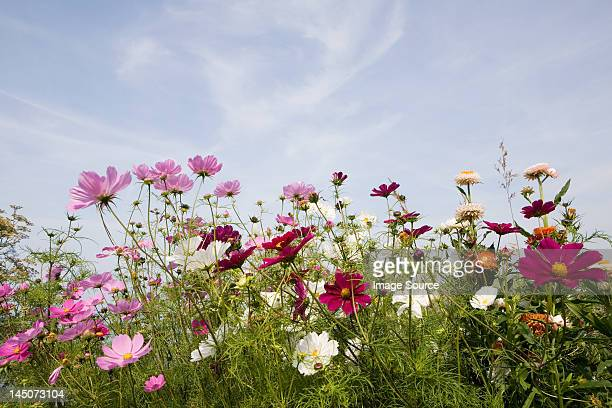 colourful flowers - wild flowers stock pictures, royalty-free photos & images