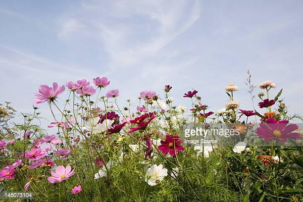colourful flowers - fleurs des champs photos et images de collection