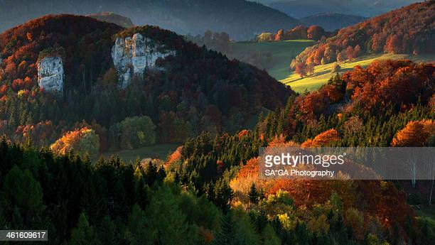 Colourful forest in autumn in northern Switzerland
