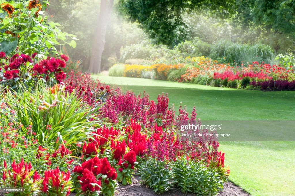 Colourful herbaceous flower borders in the summer sunshine : Stock Photo