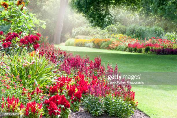 colourful herbaceous flower borders in the summer sunshine - landscaped stock pictures, royalty-free photos & images