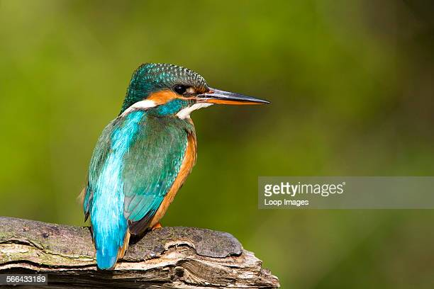A colourful kingfisher perched on a branch