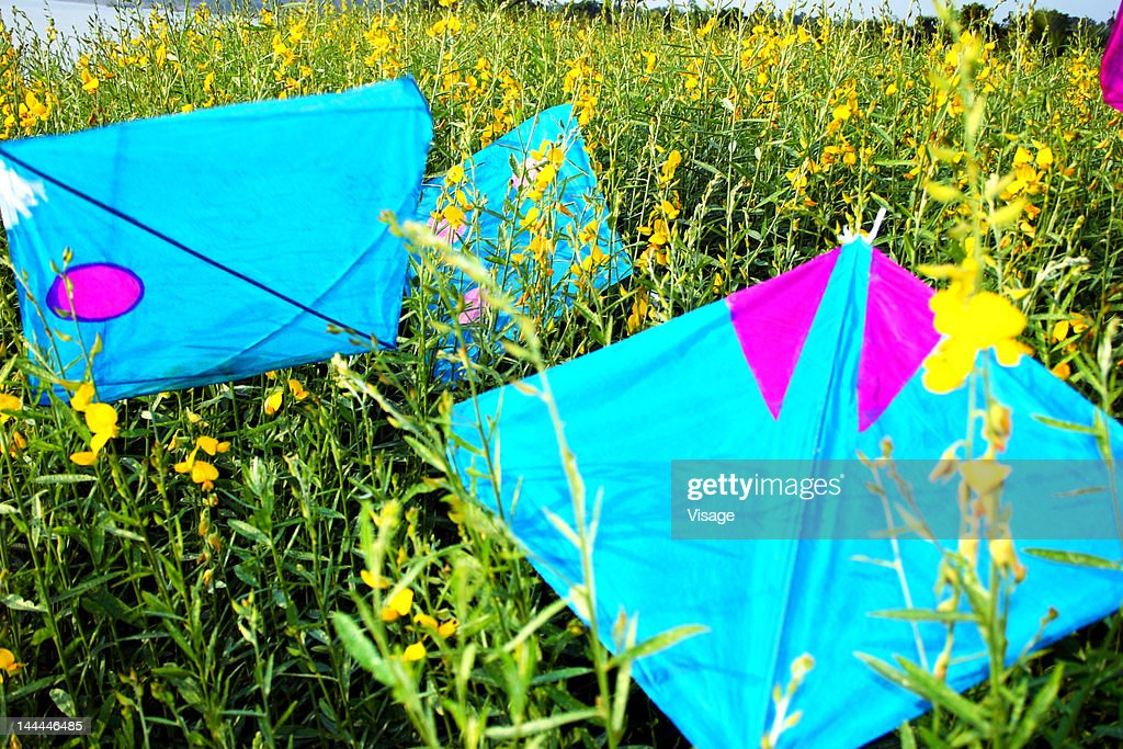 Colourful kites in a field : Stock Photo