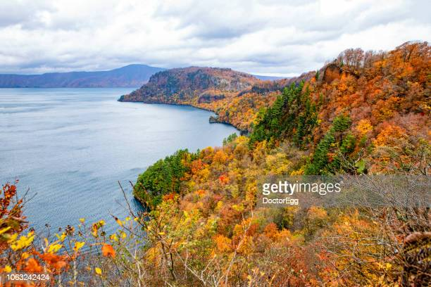 colourful maple tree on hillside with towada lake in autumn, japan - iwate prefecture stock pictures, royalty-free photos & images