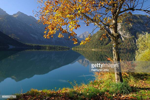 Colourful maple tree on lake in autumn