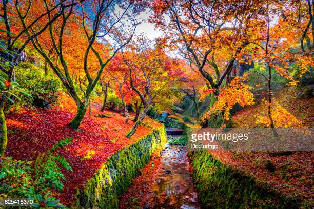 colourful maple tree with canal - kyoto japan stock photos and pictures