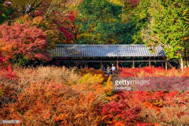 Colourful Maple Trees at Tofukuji Temple in Autumn
