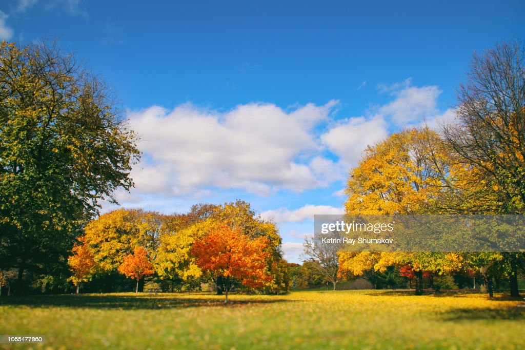 Colourful Nature: Autumn Beauty in the Park : Stock Photo