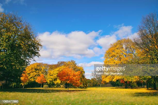 colourful nature: autumn beauty in the park - autumn falls stock pictures, royalty-free photos & images