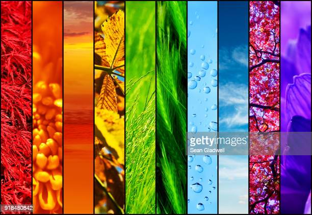 colourful nature collage - design elements stock photos and pictures