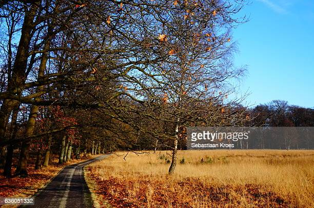 Colourful overview, Hoge Veluwe, the Netherlands