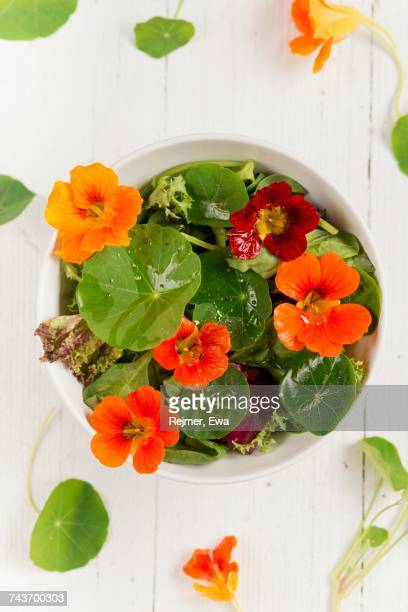 a colourful salad with water cress flowers and leaves - nasturtium stock pictures, royalty-free photos & images