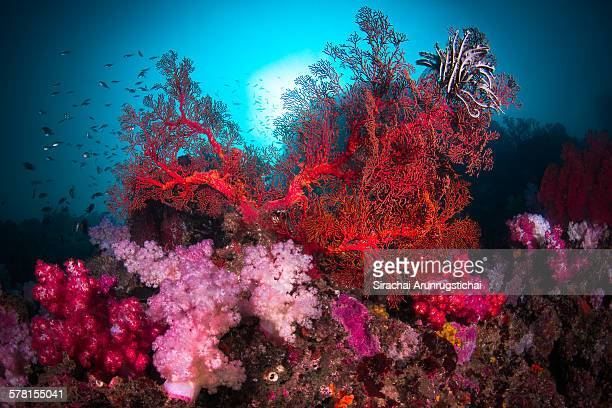 a colourful scene of coral reef - reef stock pictures, royalty-free photos & images