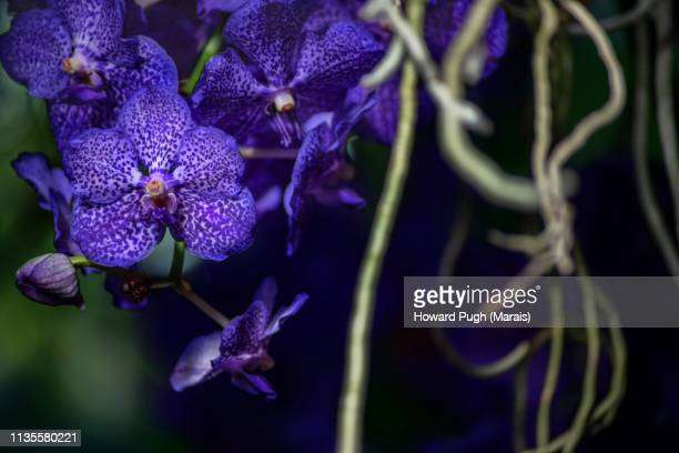 Colourful Spring Time South American Orchids