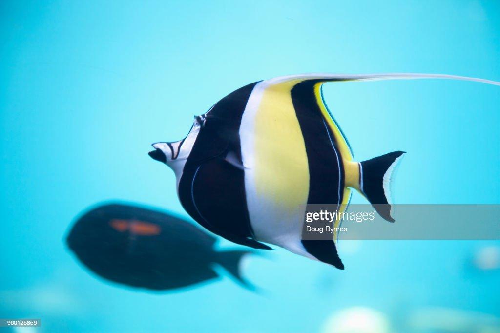 Colourful striped fish : Stock-Foto