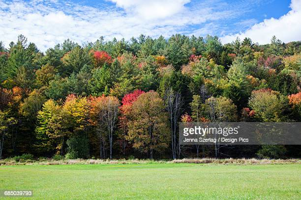Colourful trees in autumn