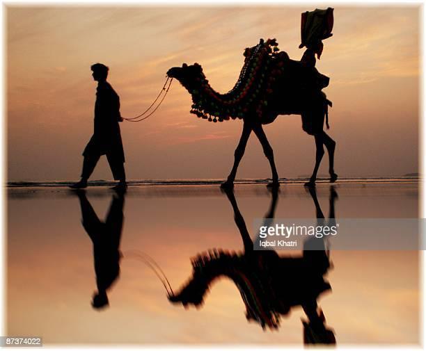 colours and camel karachi beach - カラチ ストックフォトと画像
