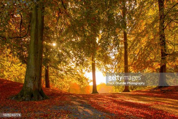 colours of autumn - herfst stockfoto's en -beelden