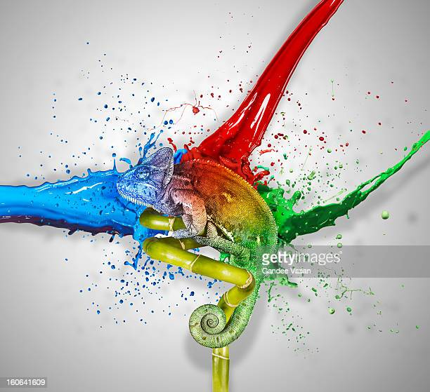 colours - chameleon stock photos and pictures