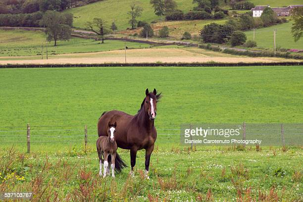colt and mom - daniele carotenuto stock pictures, royalty-free photos & images