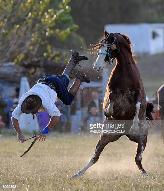 A colt shakes off his rider in a rodeo at the Chinchillas club in Estacion Atlantida 50 km from Montevideo Uruguay on May 1 2008 during a celebration...