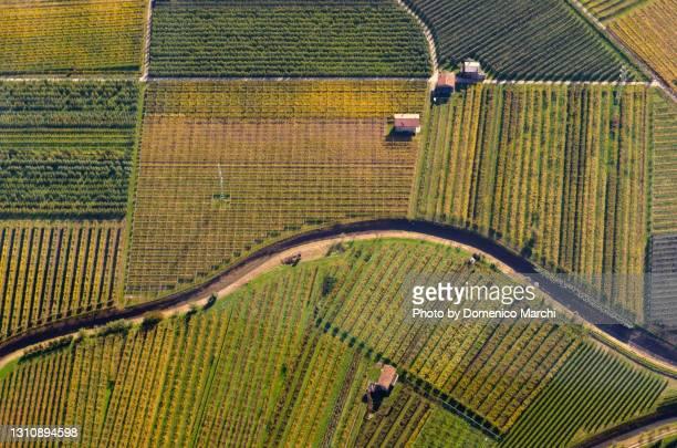 coltivazione di mele del trentino in autunno vista dall'alto. - トレンティーノ ストックフォトと画像