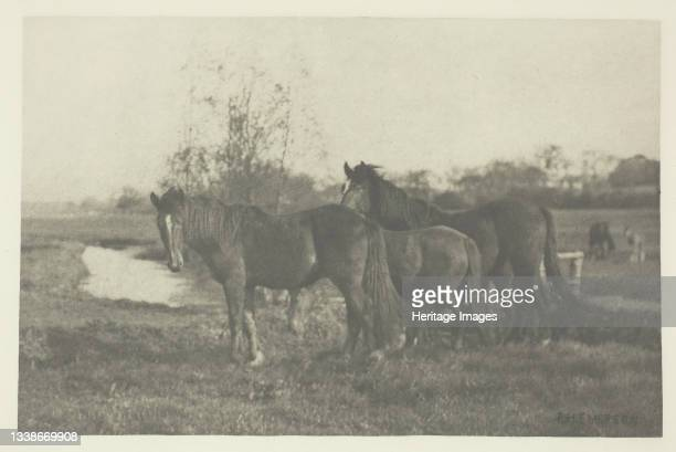 Colts on a Norfolk Marsh, 1883/87, printed 1888. A work made of photogravure, pl. V from the album 'pictures of east anglian life' . Artist Peter...
