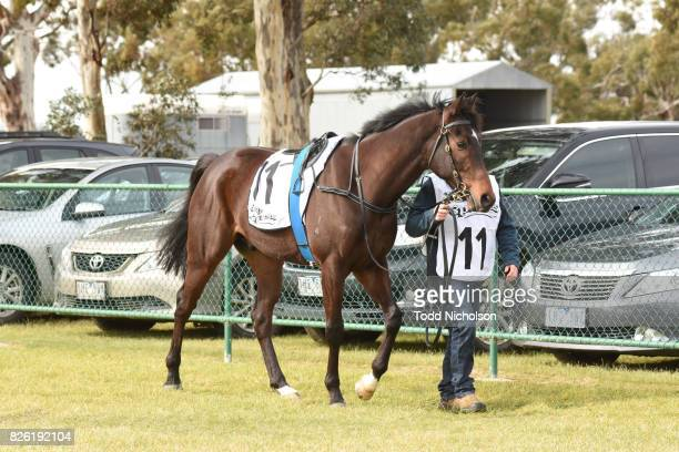Columbia parades before Woodbine Salutes Gwen Bill Steinmeyer Maiden Plate at Warracknabeal Racecourse on August 04 2017 in Warracknabeal Australia