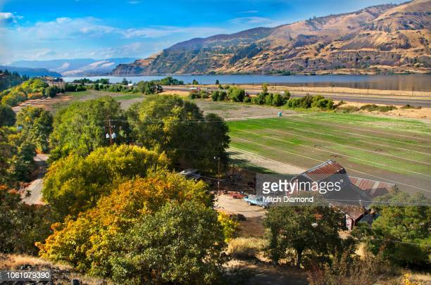 columbia river gorge farmland - hood river stock pictures, royalty-free photos & images