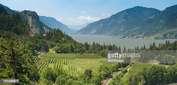 columbia river gorge panorama oregon usa - pacific crest trail stock pictures, royalty-free photos & images