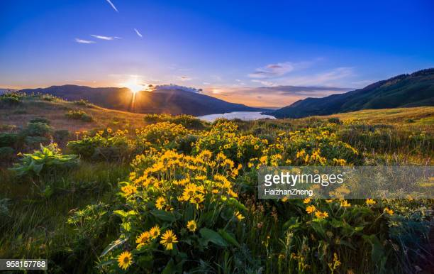 columbia river gorge wildflowers - columbia river gorge stock pictures, royalty-free photos & images