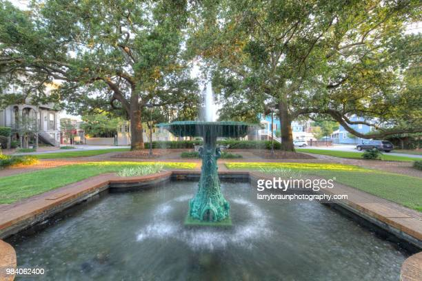 columbia square - live oak tree stock pictures, royalty-free photos & images