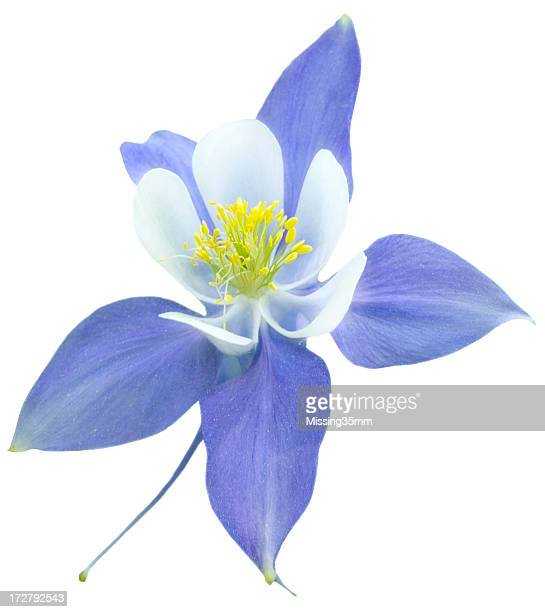 Columbine Isolated